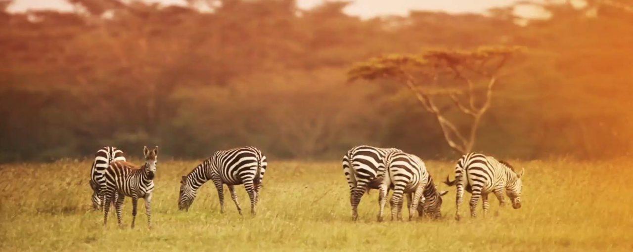 Grab Your Group And Go On Safari