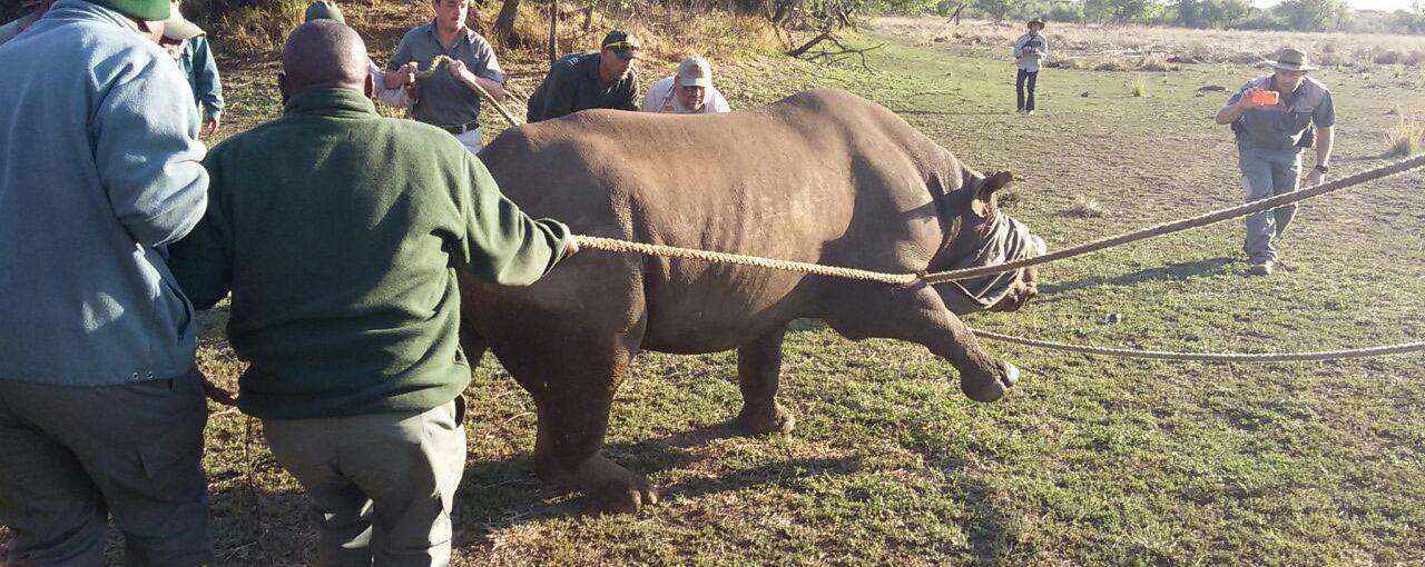 Black Rhino Release
