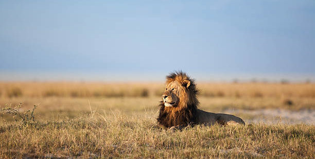 With wildlife like this how can you not come to Africa?