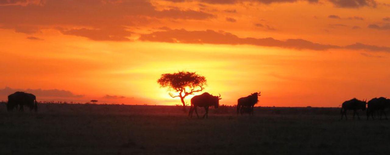Kenya Captures Sandi's Heart