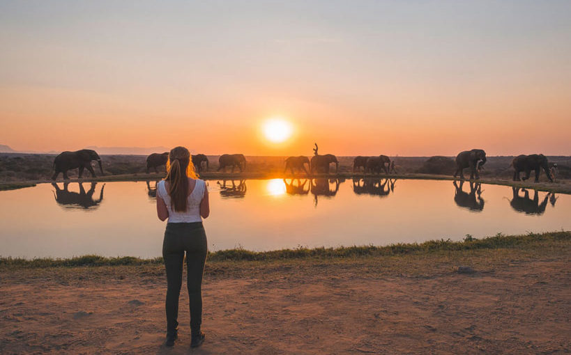 A Soulful Safari Experience For Less